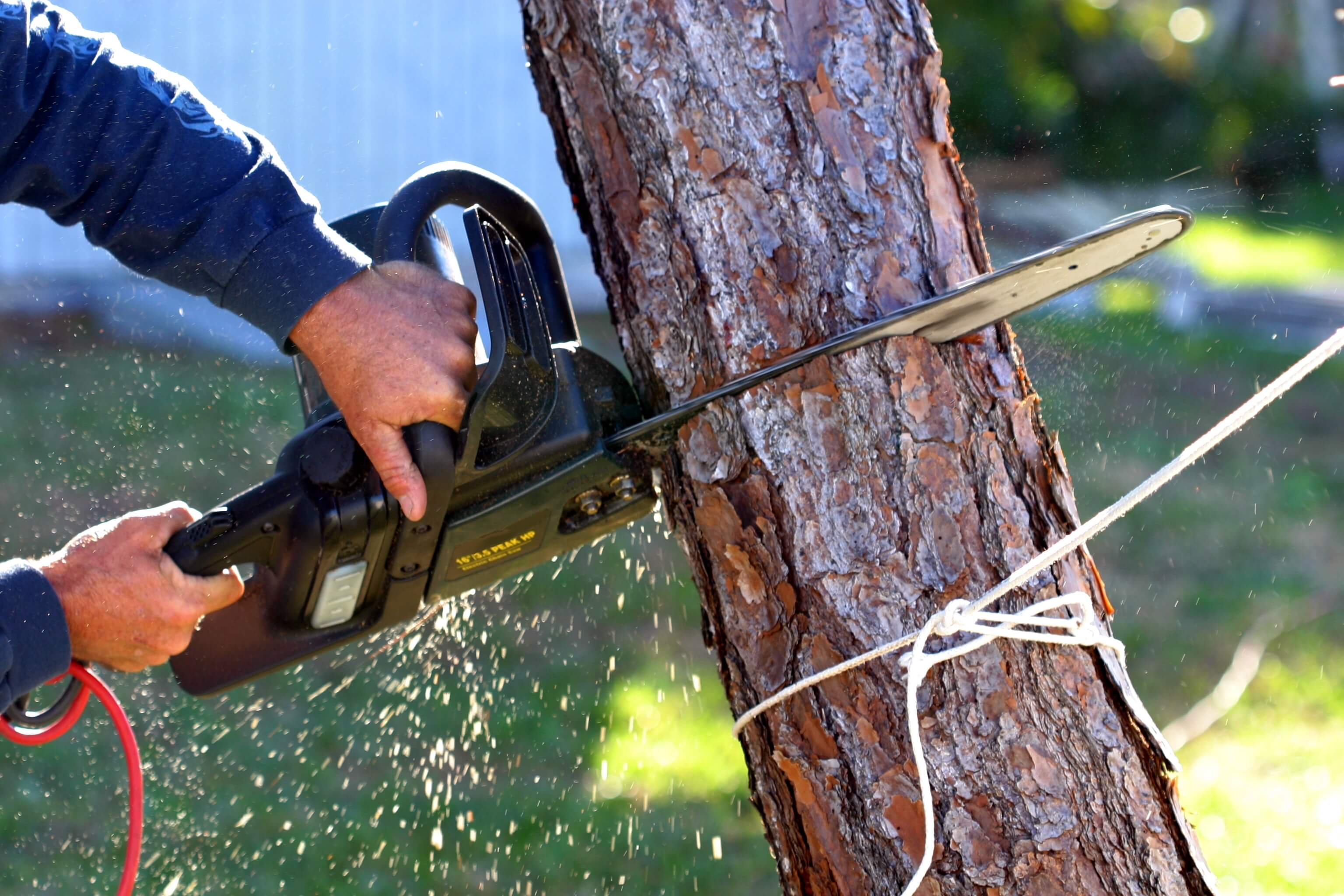 tree cutters Auckland