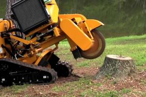 Gold Coast stump grinding