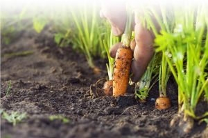 garden fertilizer NZ