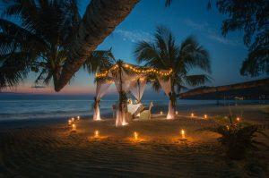 palm tree removal Gold Coast