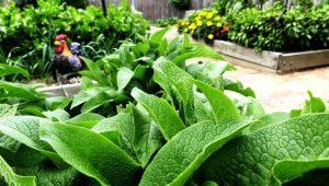organic fertilizer NZ