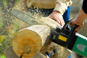 gold coast tree loppers
