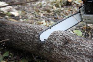 Tree Removal Gold Coast City Council