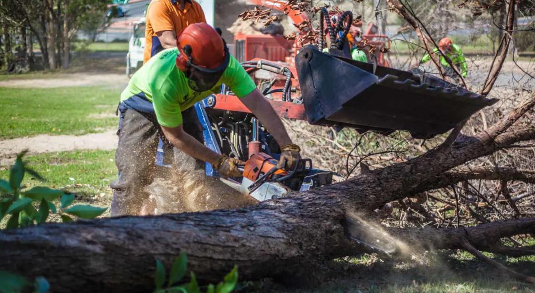 Tree relocation Logan